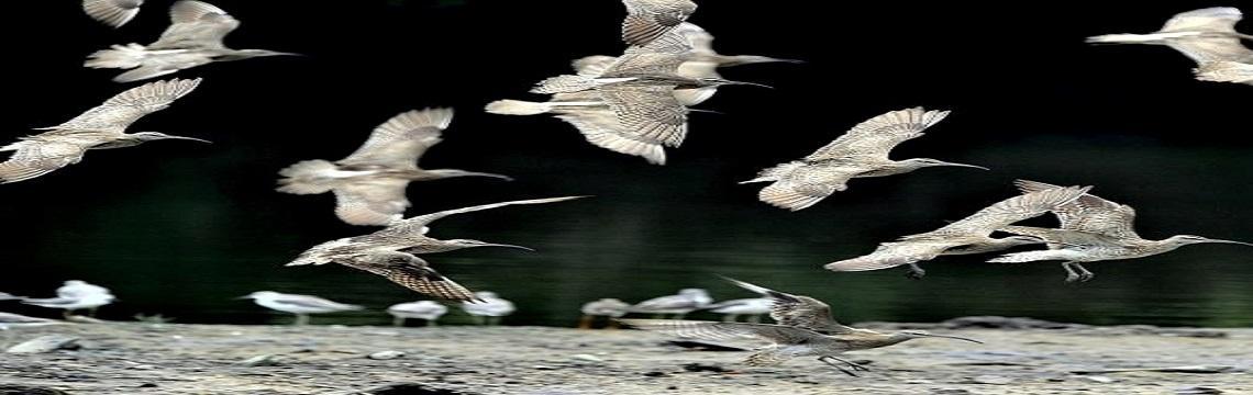 Sungei Buloh Wetland Reserve – An Ecological Gem with Rich Biodiversity 06.jpg-1140x360