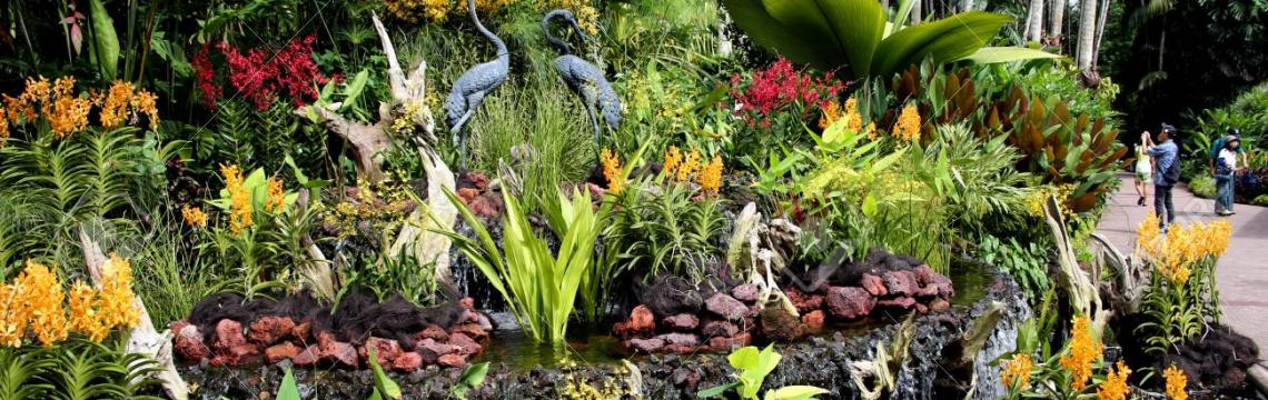 National Orchid Garden 3.jpg-1140x360
