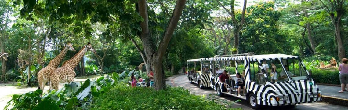 03 Singapore Zoo.jpg-1140x360