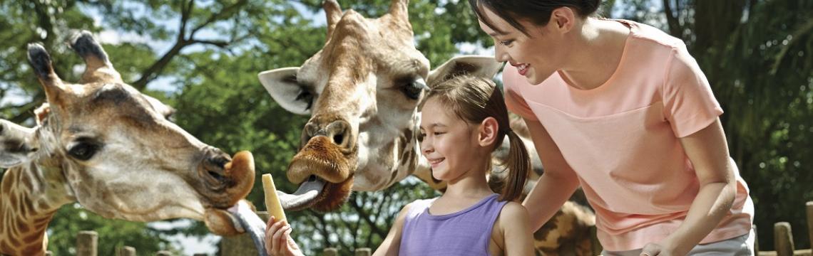 Singapore Zoo - Giraffe Feeding.jpg-1140x360