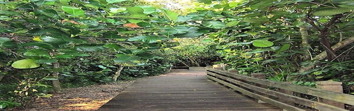 Sungei Buloh Wetland Reserve – An Ecological Gem with Rich Biodiversity 07.jpg-1140x360