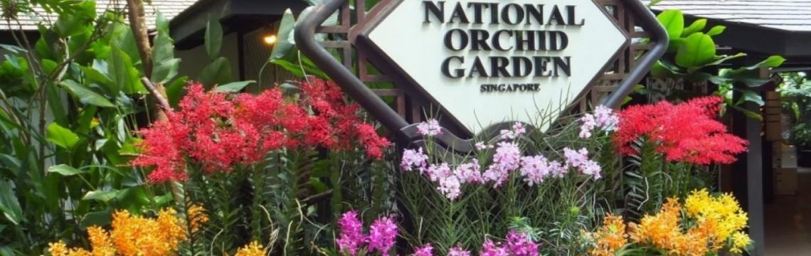 National Orchid Garden 2.jpg-1140x360