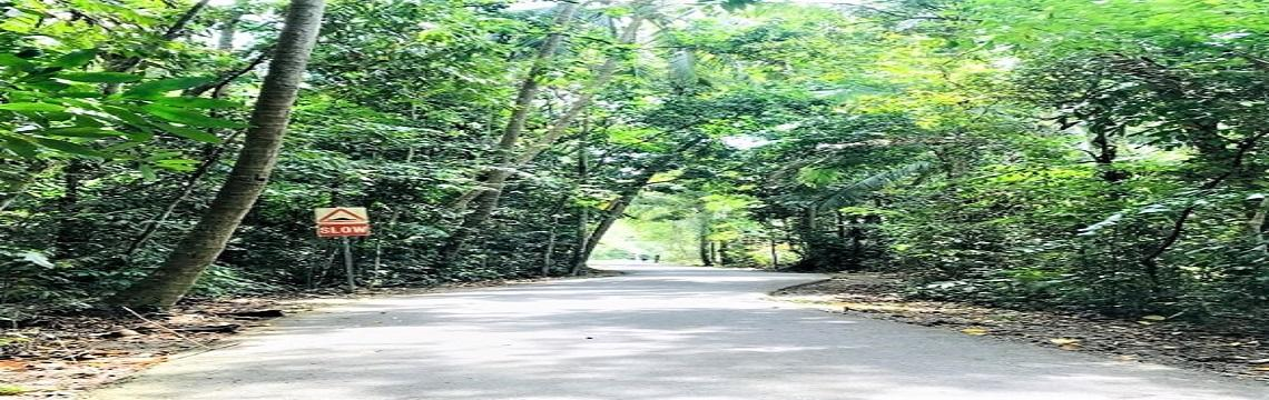 Pulau Ubin & Chek Jawa – Rustic Singapore & A Wetlands Treasure 04.jpg-1140x360