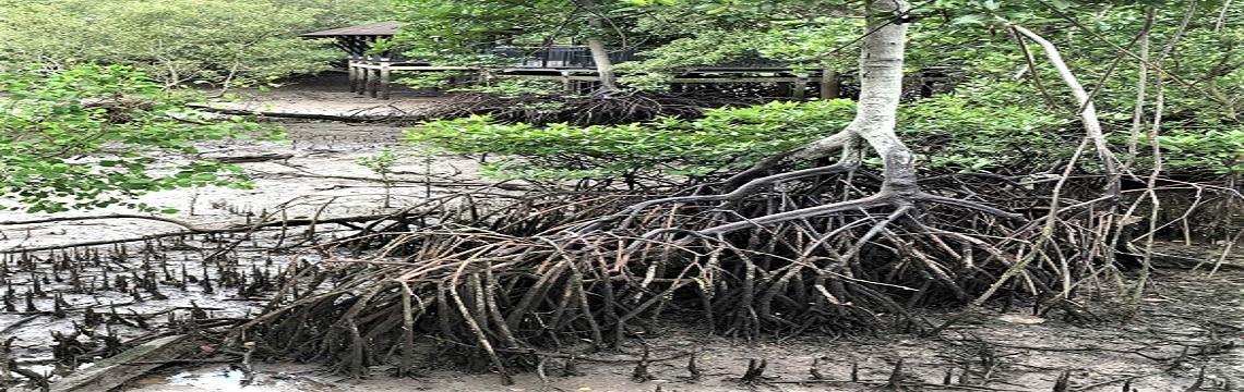 Sungei Buloh Wetland Reserve – An Ecological Gem with Rich Biodiversity 04.jpg-1140x360
