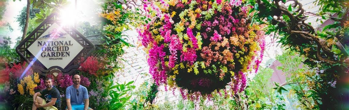 National Orchid Garden 4.jpg-1140x360
