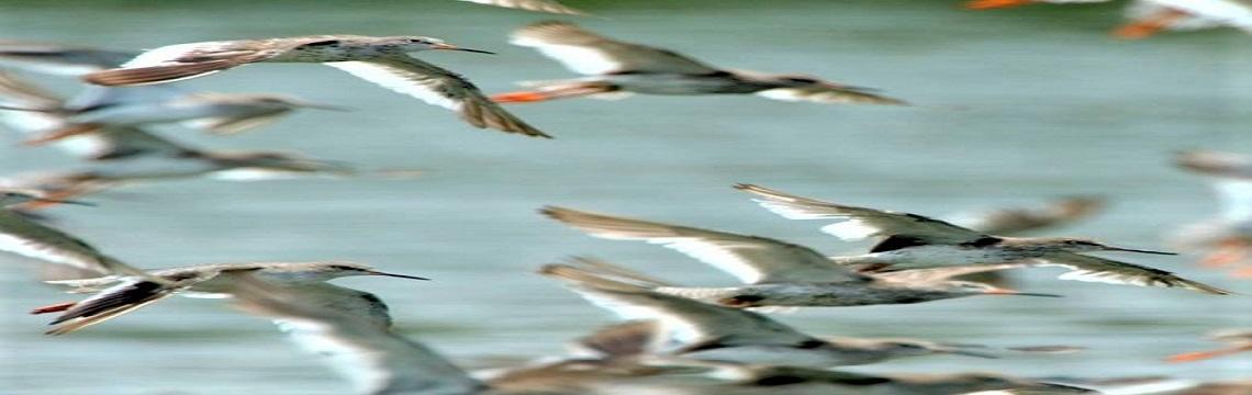 Sungei Buloh Wetland Reserve – An Ecological Gem with Rich Biodiversity 05.jpg-1140x360