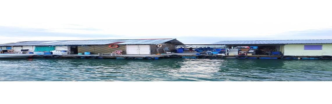 Kelongs, Fish Farming & Pulau Ubin - A Marine Adventure & Kampong Singapore 5.jpg-1140x360