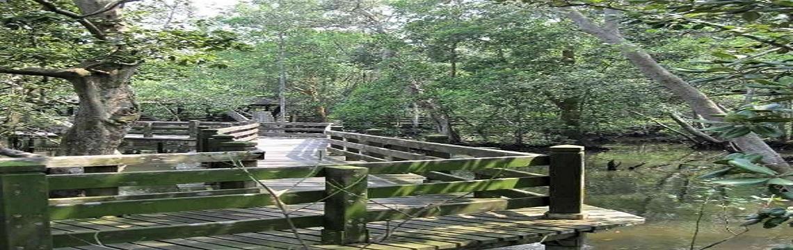 Sungei Buloh Wetland Reserve – An Ecological Gem with Rich Biodiversity 02.jpg-1140x360