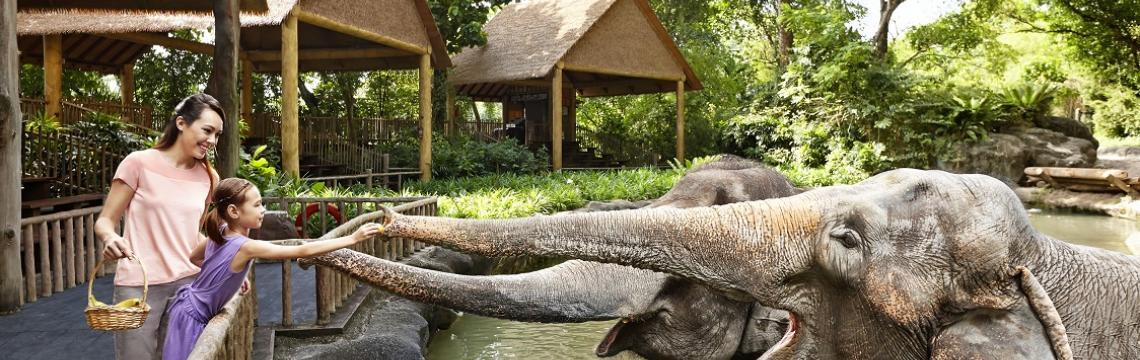 Singapore Zoo -  Elephant Feeding.jpg-1140x360