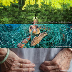 3 Exhibitions (Future World + Planet or Plastic + Margins) - Adult
