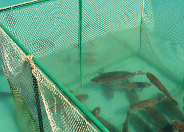 Sustainability In Fish Farming & Aqua Culture