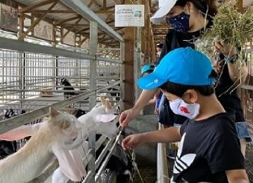 Farm tour (Half day)